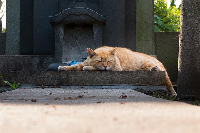 ペットの墓石と埋葬方法